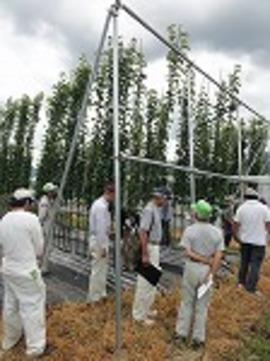 ジョイント栽培用の苗木の養成です。この位に伸ばすのが難しいです
