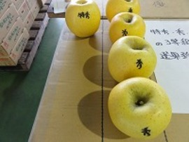 見本の果実