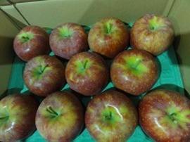 リンゴ「シナノリップ」です